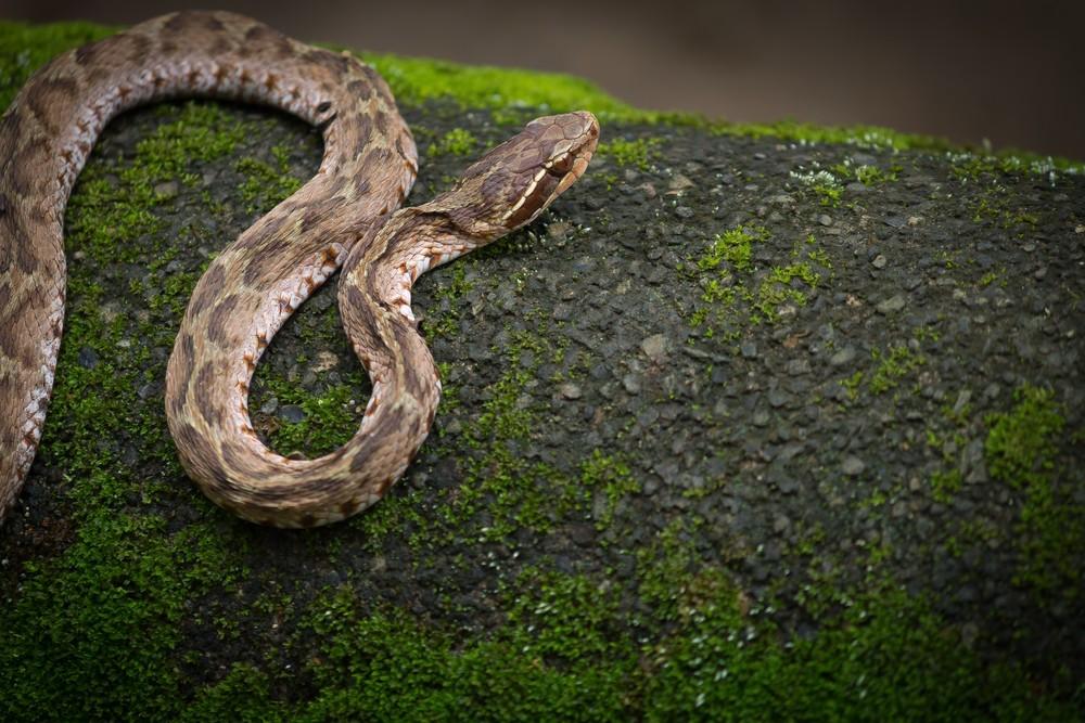 アウトドアで注意したい危険生物13選!登山・渓流釣りで出会う動物・昆虫