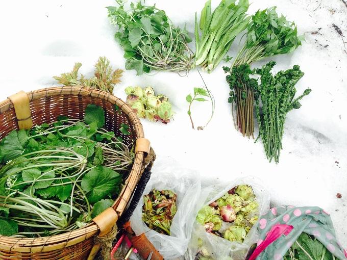 2015年 山菜採りスタート!@新潟県下越地方初日は11品目達成◎