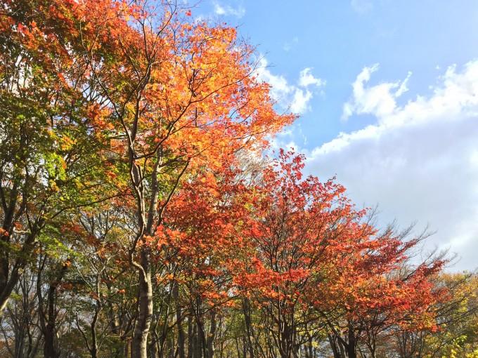 2015年10月きのこ狩り@新潟県 なめこ / ムキタケ8