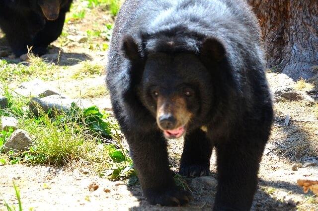 bear-protection-3
