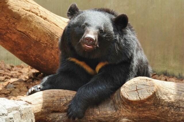 bear-protection