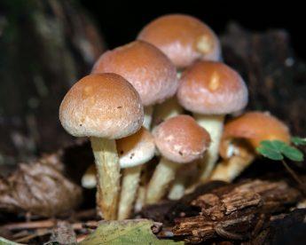 mushroom-965621_1280