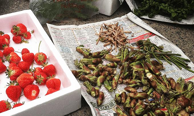 山菜の時期 タラの芽、わらび、こごみ