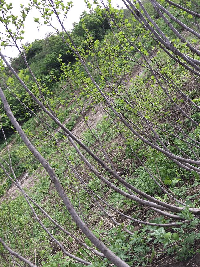 wild-plants-2015-05-05-02