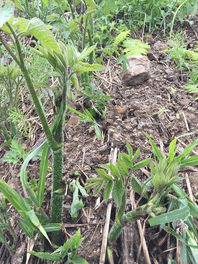 wild-plants-2015-05-05-03