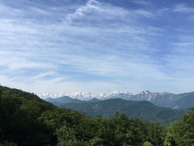 5月24日の山菜採り@山形県/コシアブラの森