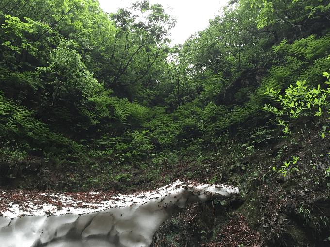 wild-plants-2015-05-31-01