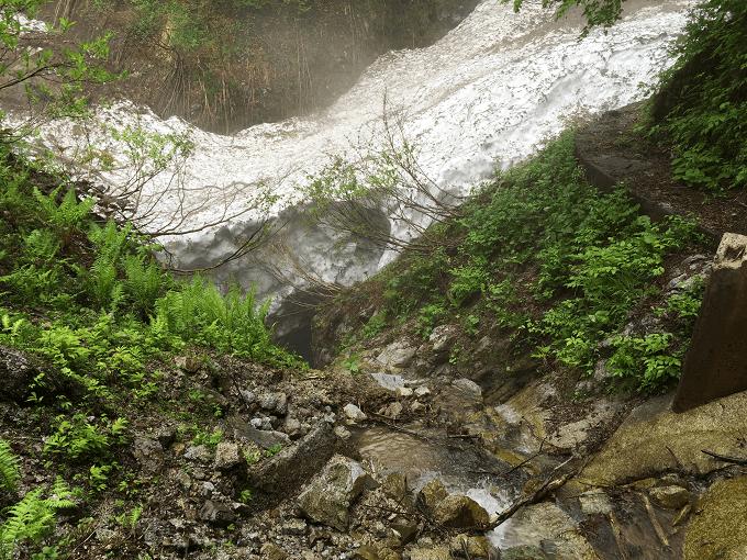 wild-plants-2015-05-31-03