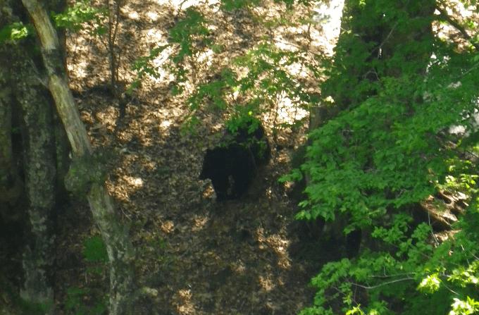 wild-plants-bear-03