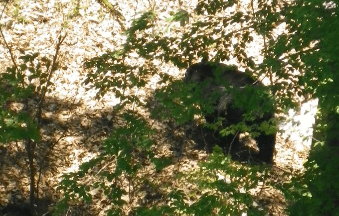 wild-plants-bear-06